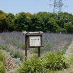『ラベンダー』を求め荒子川公園へ自転車旅♪