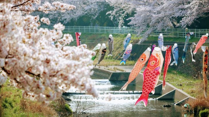 『お花見』香流川の桜:2018年No,3
